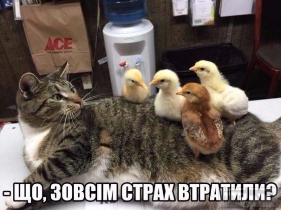 84707 - Смешные видео и фото с животными.