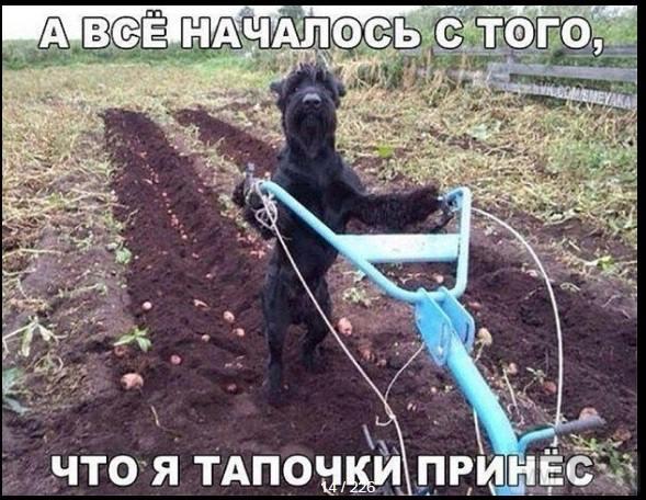 85706 - Смешные видео и фото с животными.