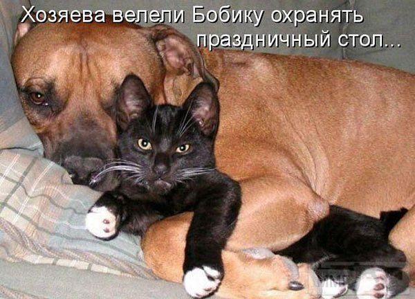86685 - Смешные видео и фото с животными.