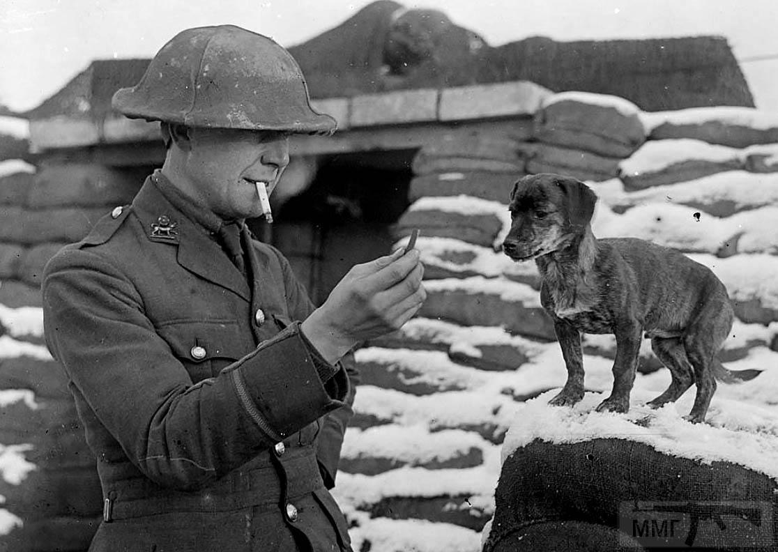 87931 - Военное фото. Западный фронт. 1914-1918г.г.
