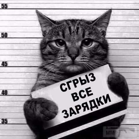 88016 - Смешные видео и фото с животными.