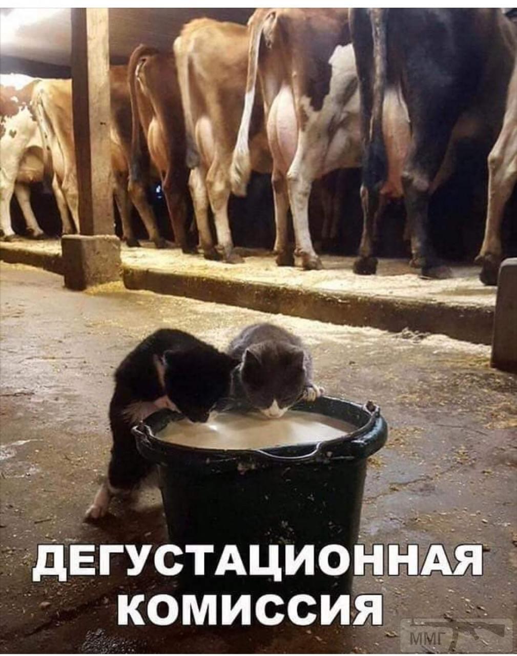 88113 - Смешные видео и фото с животными.