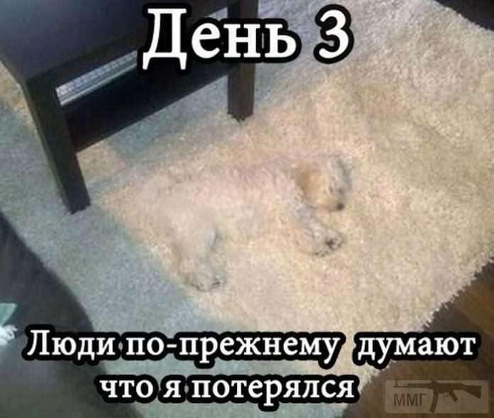 88415 - Смешные видео и фото с животными.