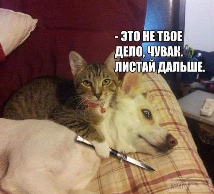88563 - Смешные видео и фото с животными.
