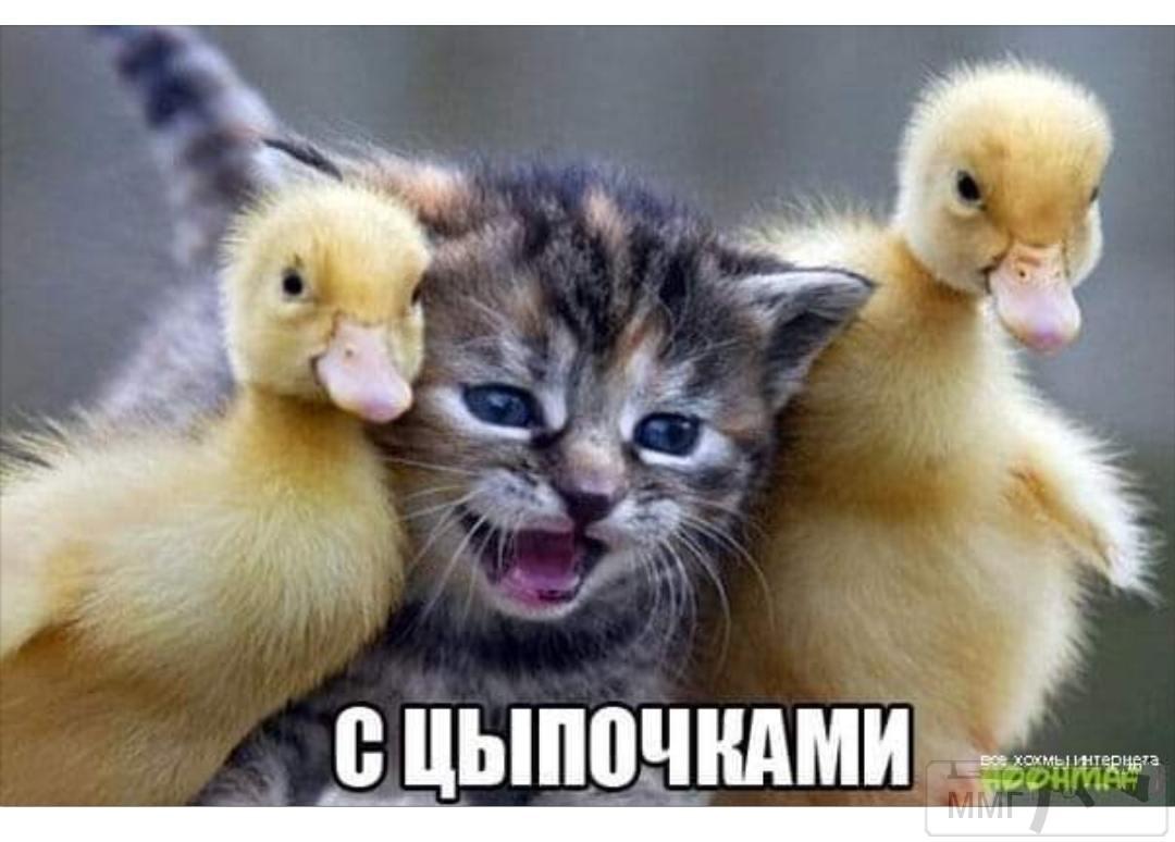 89540 - Смешные видео и фото с животными.