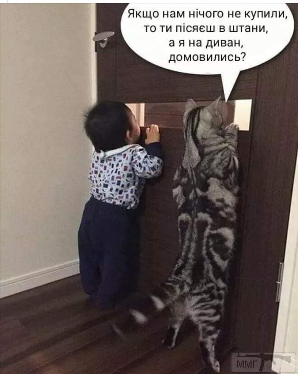 89657 - Смешные видео и фото с животными.