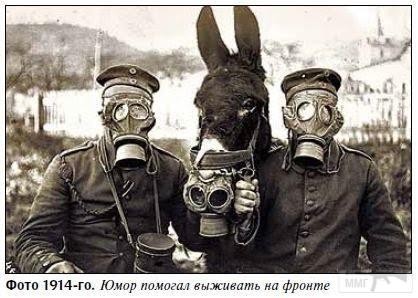 89857 - Животные на войне