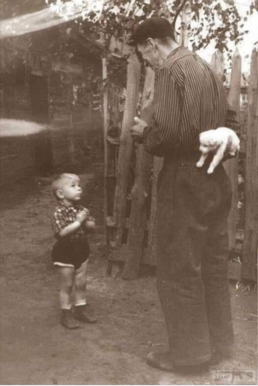 89858 - Смешные видео и фото с животными.