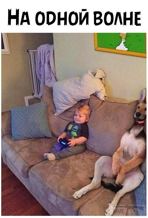 90492 - Смешные видео и фото с животными.