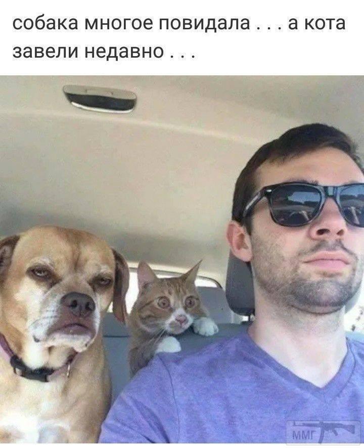 91343 - Смешные видео и фото с животными.
