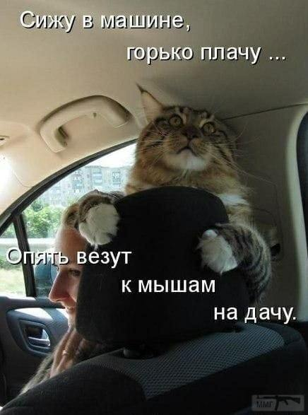 91666 - Смешные видео и фото с животными.