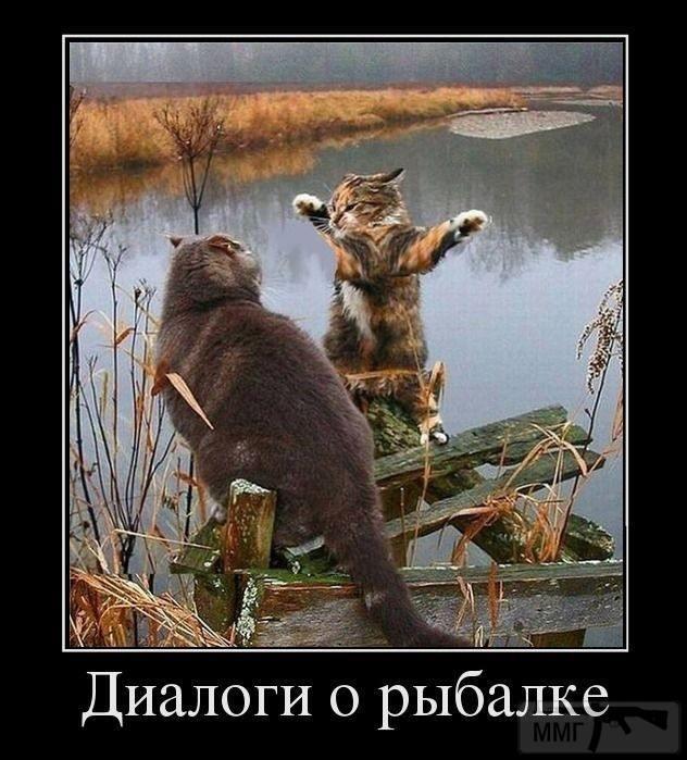 91667 - Смешные видео и фото с животными.
