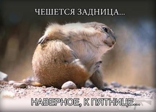 94476 - Смешные видео и фото с животными.