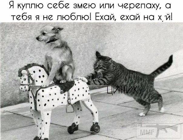 95743 - Смешные видео и фото с животными.