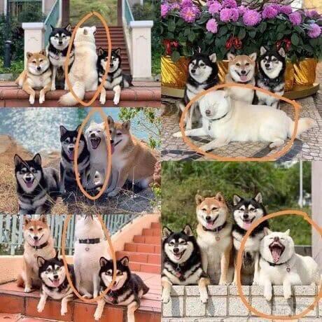95752 - Смешные видео и фото с животными.