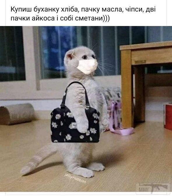 95783 - Смешные видео и фото с животными.
