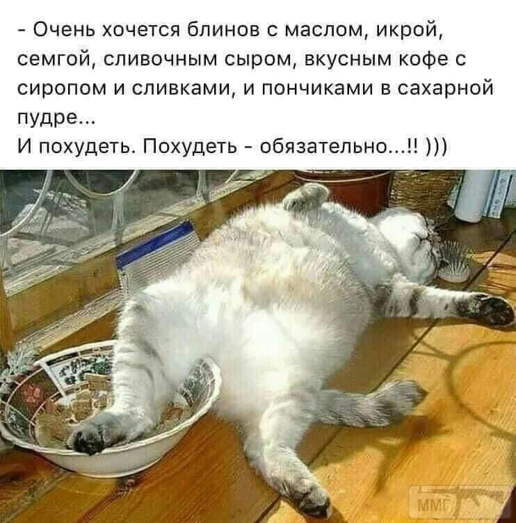 95784 - Смешные видео и фото с животными.