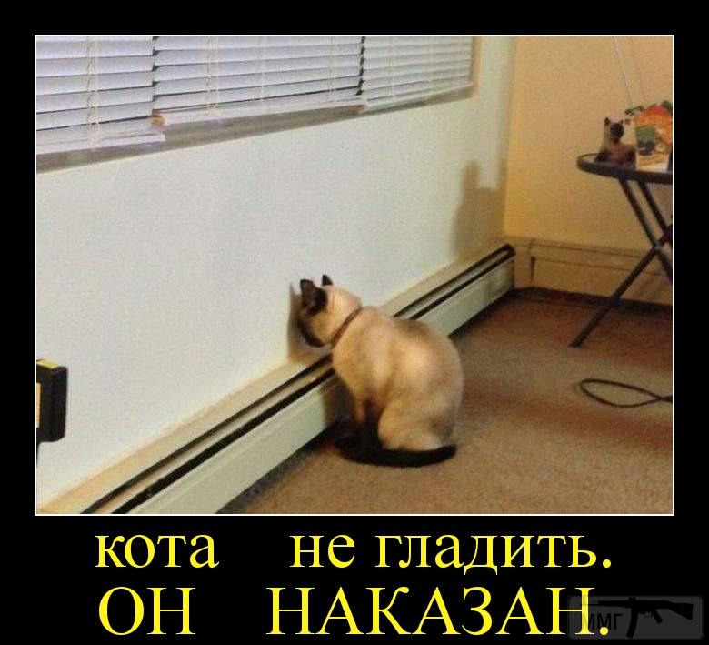 95789 - Смешные видео и фото с животными.