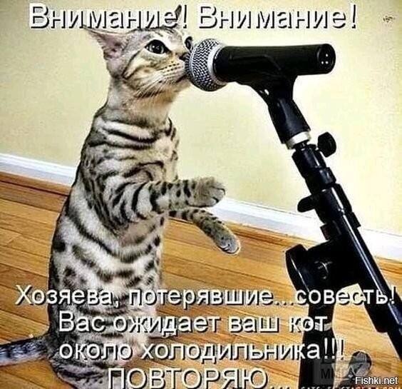 96279 - Смешные видео и фото с животными.