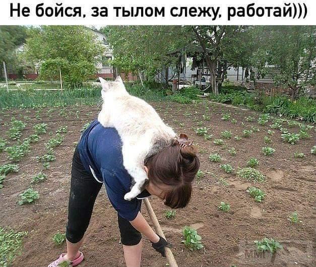96368 - Смешные видео и фото с животными.