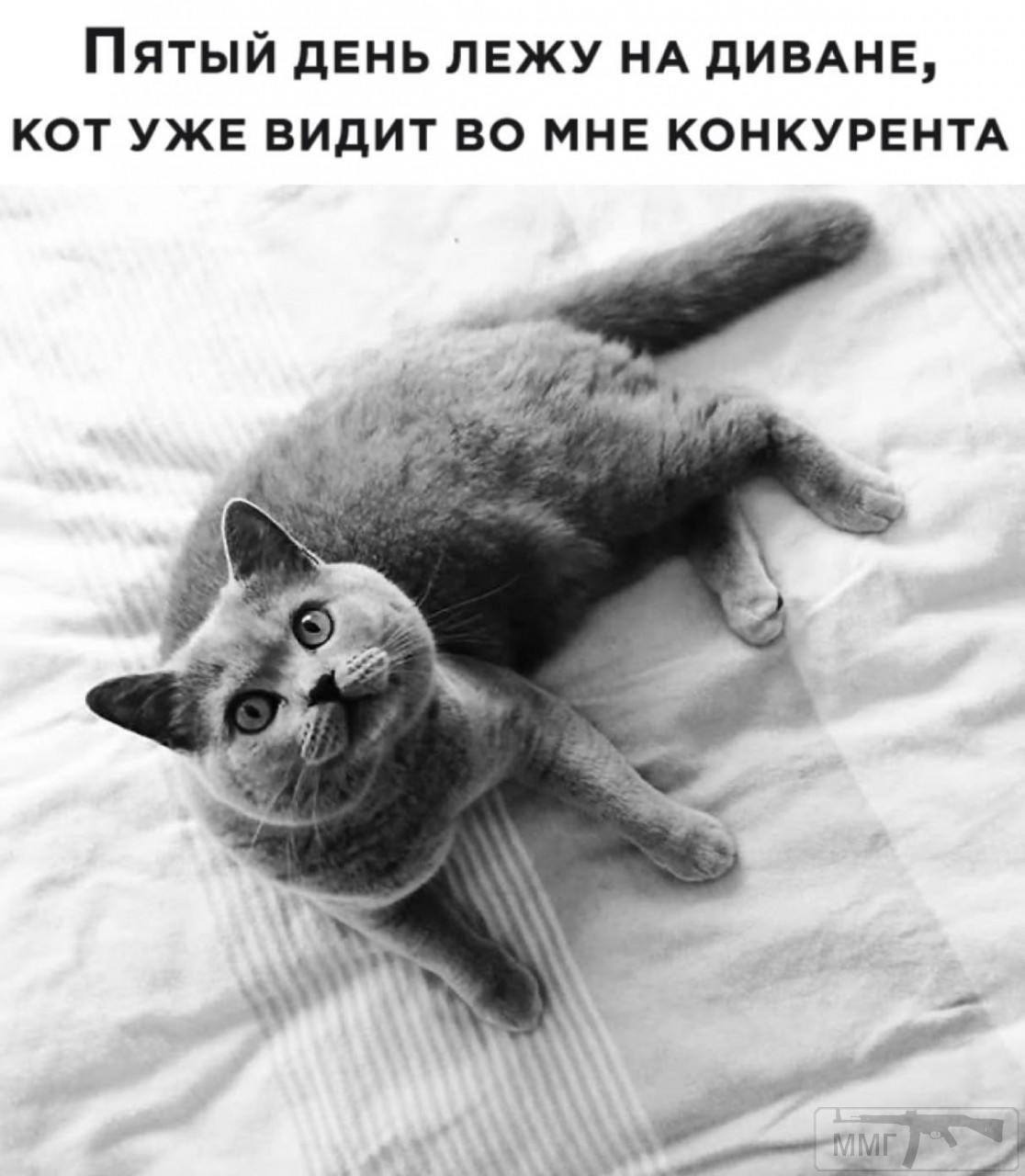 96892 - Смешные видео и фото с животными.