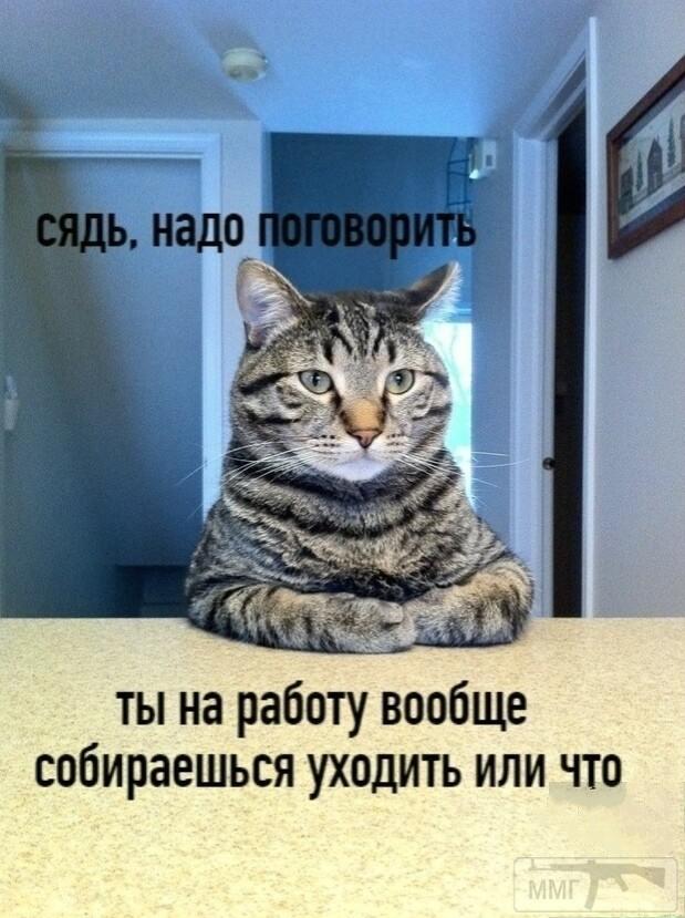 96895 - Смешные видео и фото с животными.