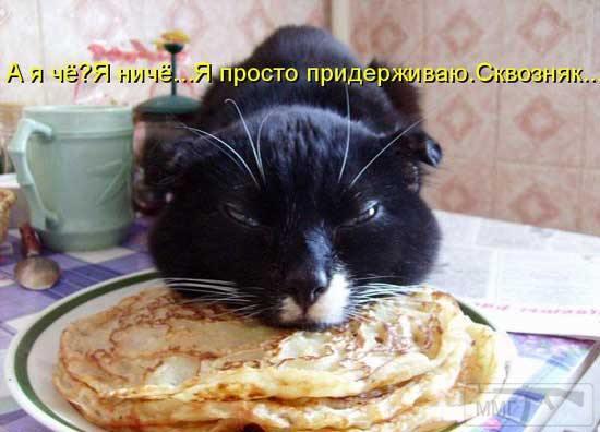 97153 - Смешные видео и фото с животными.