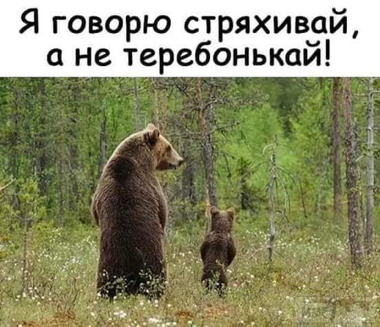 97733 - Смешные видео и фото с животными.