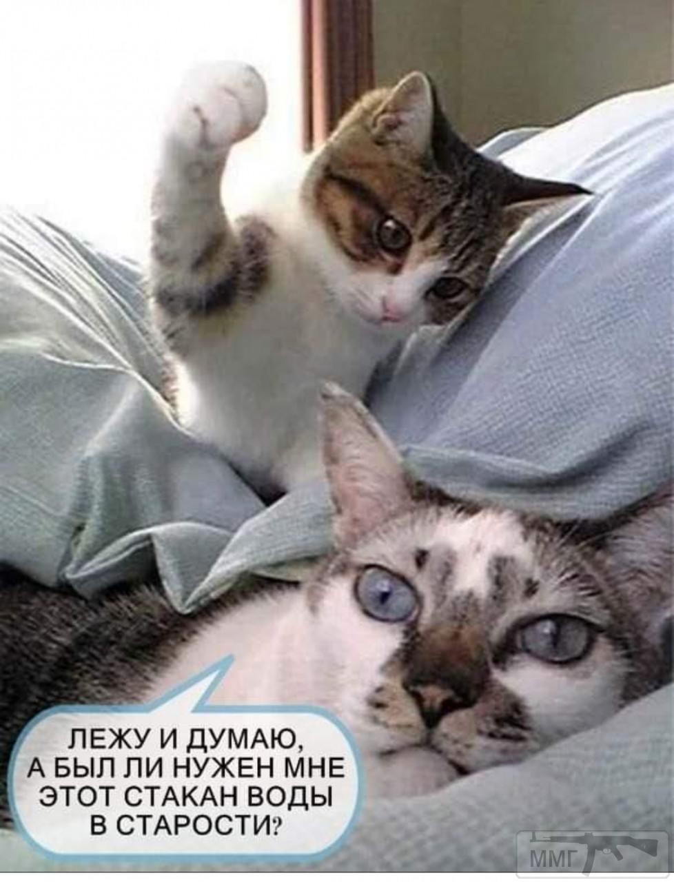 98215 - Смешные видео и фото с животными.