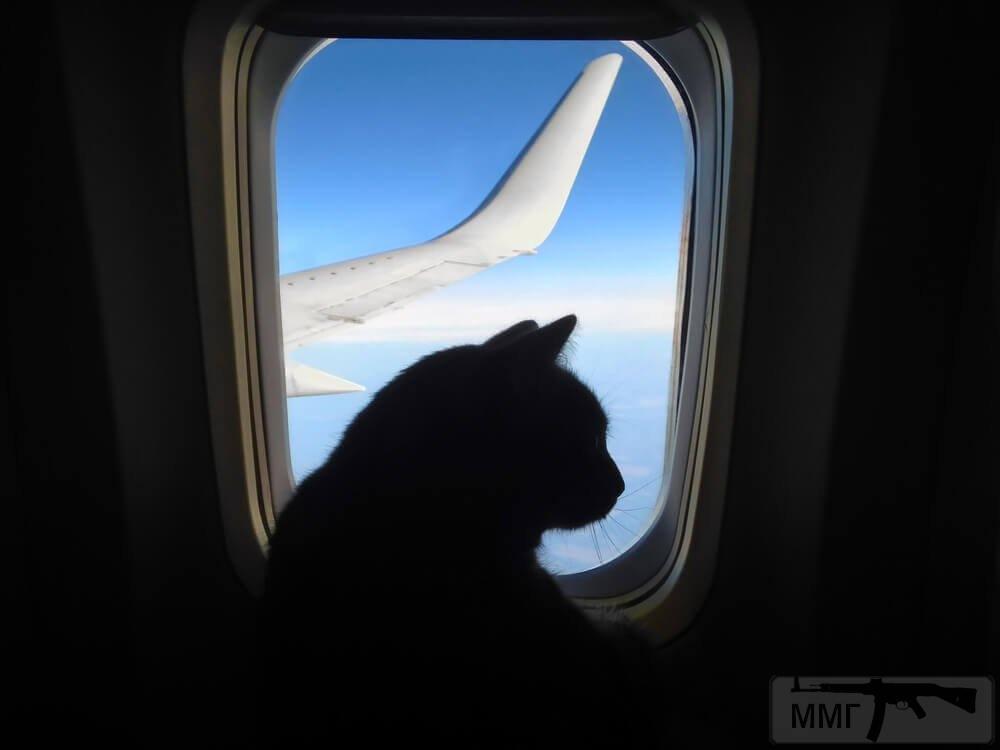 98623 - Авиационные курьёзы