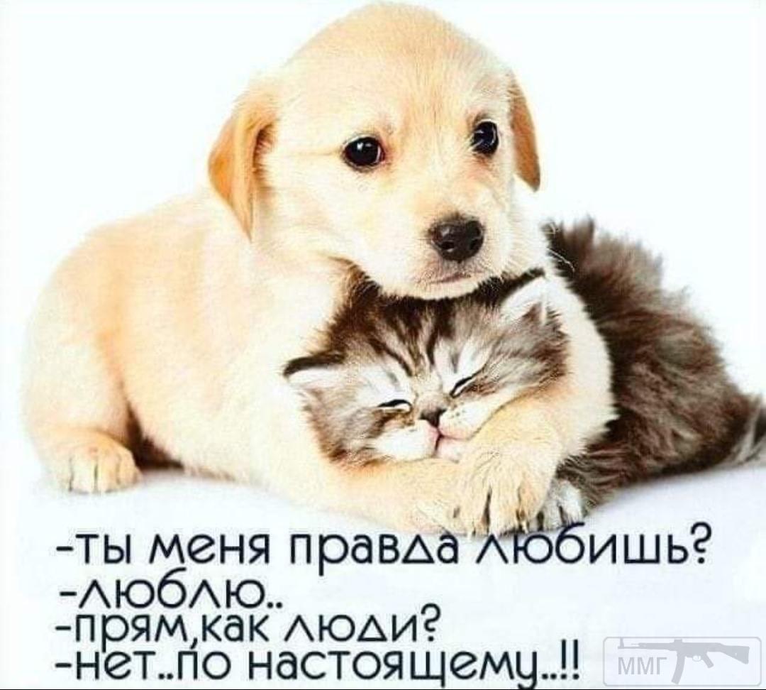 98863 - Смешные видео и фото с животными.