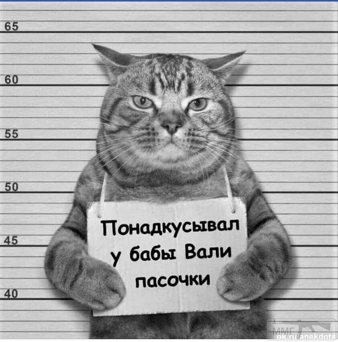 98864 - Смешные видео и фото с животными.