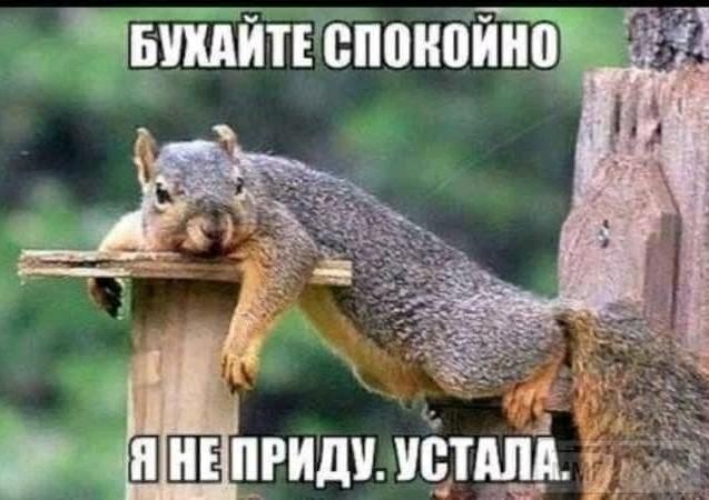 99087 - Пить или не пить? - пятничная алкогольная тема )))