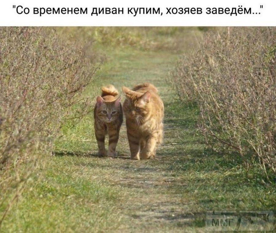 99810 - Смешные видео и фото с животными.
