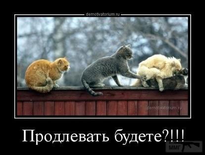 99841 - Смешные видео и фото с животными.